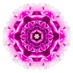 Purple Kaleidoscopic Carnation Flower Mandala Isolated on White