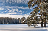 Marvelous winter sky and forest