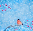 Bullfinch sitting on a branch with berries, blurred background.