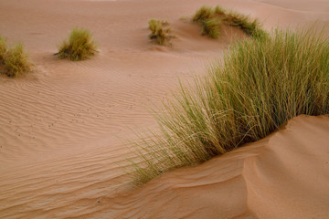 Vita nel deserto