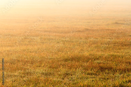 Leinwandbild Motiv agricultural field