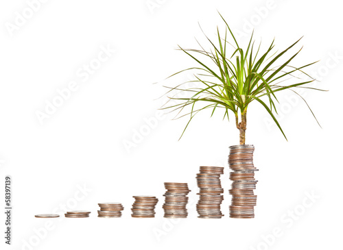 Money growth concept on a white background