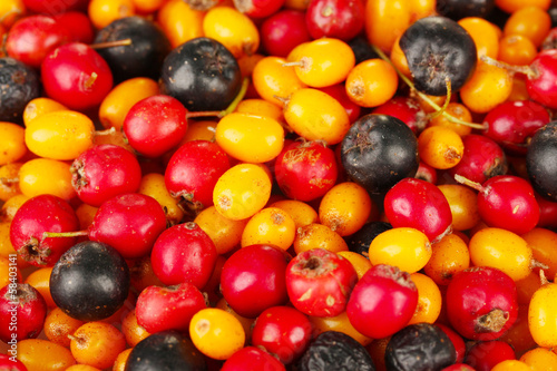 autumn berries close-up