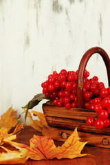 Red berries of viburnum in basket with yellow leaves