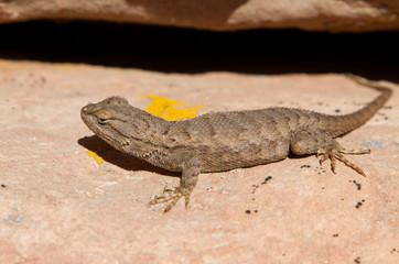 Sun bath for lizard