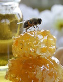 macro shot of honey bee on a honeycomb (natural product)