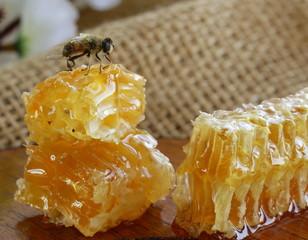 macro shot of honey bee on a honeycomb (natural product)