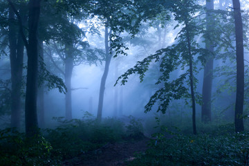 Trees, silhouetted in the mist