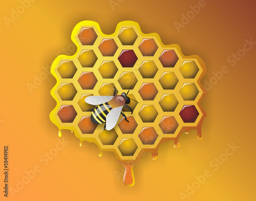 Working Bee and Honeycomb - Illustration