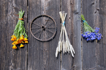 wheat and medical herbs bunch on old wooden wall