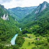 Mountain river Tara and forest in Montenegro poster