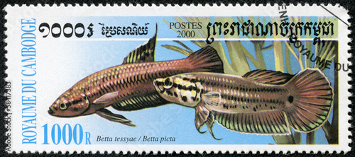 stamp printed in CAMBODIA shows fish