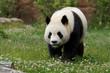 panda-2
