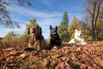 Drei Hunde mit Blick nach oben
