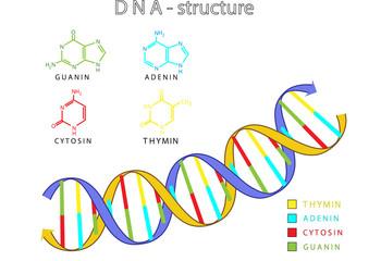DNA - Struktur
