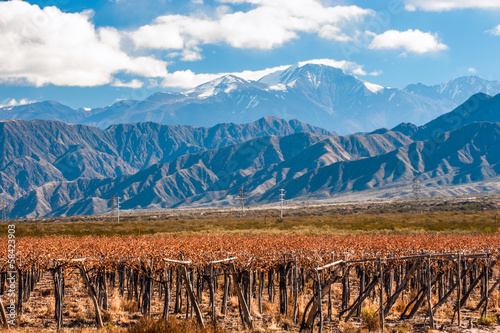 Keuken foto achterwand Wijngaard Volcano Aconcagua and Vineyard. Aconcagua is the highest mountai