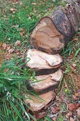 Timber 3