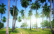 palms on beach of Phi Phi island, Thailand