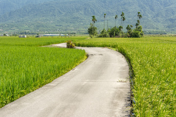 road across the paddy farm