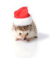 Little hedgehog ready for Christmas celebration.