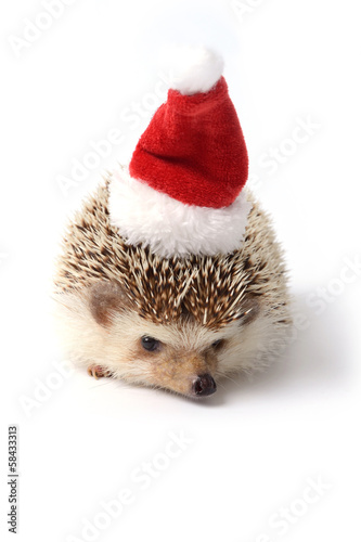 Hedgehog ready for Christmas celebration.