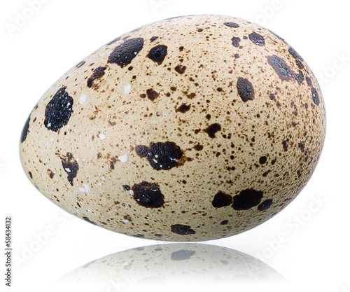 A single quail's egg