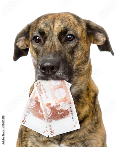 dog holding euro in its mouth. isolated on white background