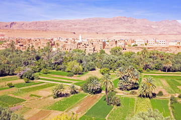 Oasis in the dade valley in Morocco Africa