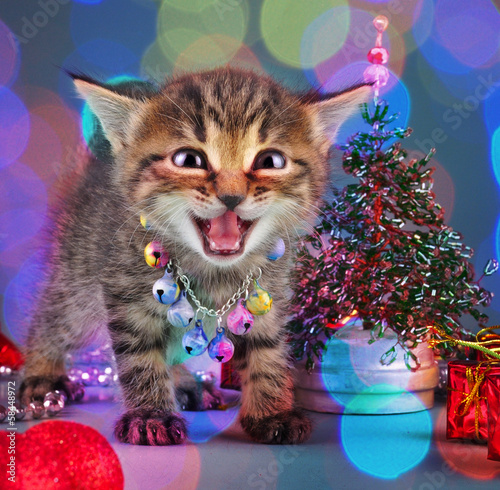 small  kitten among Christmas stuff