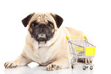 pug dog shopping trolly isolated on white background. shopper