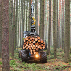 The lumberjack truck loaded with a timber.