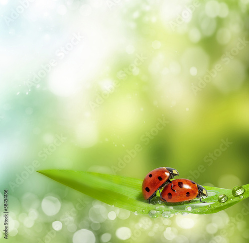 family of ladybugs at the time of reproduction