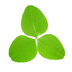Clover leaf isolated