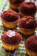 Minimuffins dekoriert mit kakao und kleiner zuckerblume