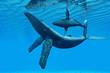 Humpback Whale Bonding - 58461760