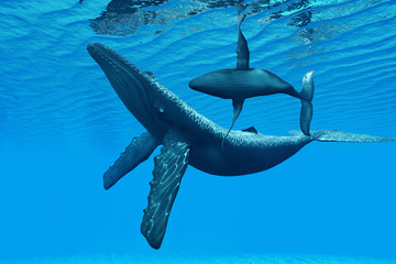 Humpback Whale Bonding