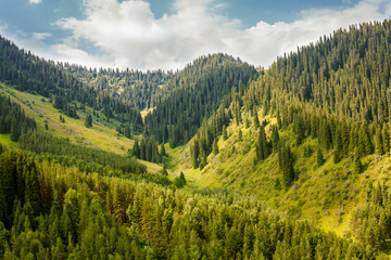 fabulous mountain landscape covered with trees
