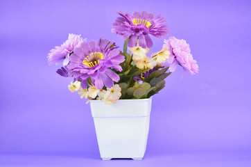 Purple flower in pot