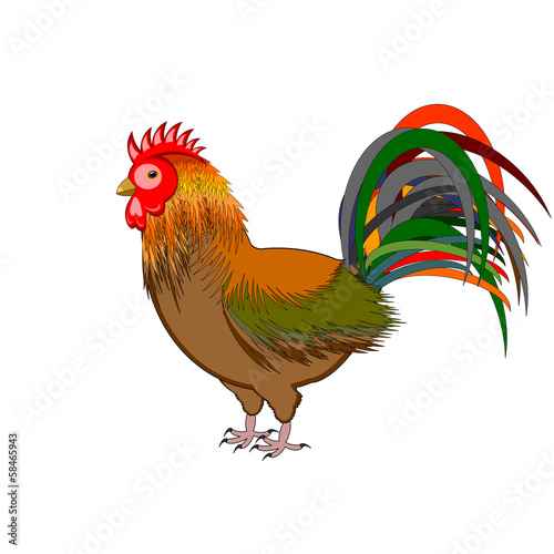 A beautiful rooster isolated on a white background