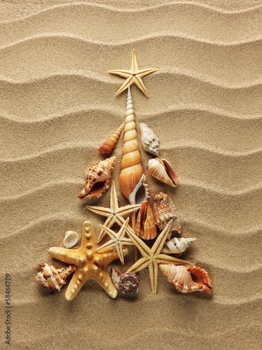 Sea shell on sand - 58466709
