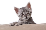 small gray tabby cat on the pillow