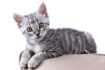 bellissimo gattino grigio sdraiato sul cuscino