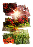 sunny lake collage