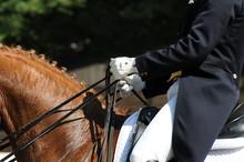 équitation de dressage