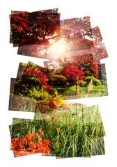 sunny lake collage