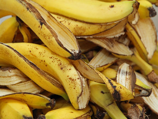 many banana peels in the composter for humus