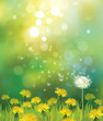 Vector of spring background with dandelions.