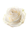 Bud of a white rose. isolated - 58486334