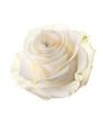 Obrazy na płótnie, fototapety, zdjęcia, fotoobrazy drukowane : Bud of a white rose. isolated