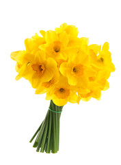 Bouquet of yellow daffodils. Isolated